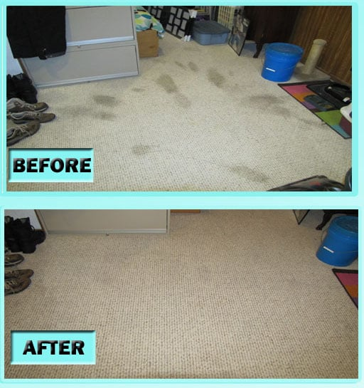 why cat pees on carpet
